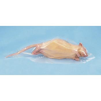 1 Per Bag 7-9 Perfect Solution Preserved Rat Single