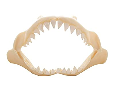 Shark Jaw Polyresin 10""