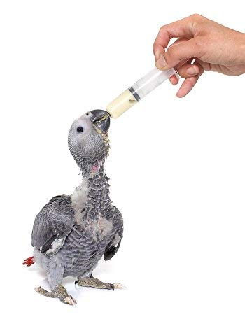 Petzlifeworld Hand Feeding Syringe with Curve Tip for Baby Birds, Puppy, Kitten, Dog, Cat & Hamster (12 ml)