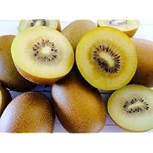 Fresh Golden KiwiFruit (2 lbs) Non GMO