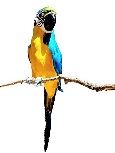 All Seas Imports X-Large Handcrafted Ultra Lightweight Parrot with Real Feathers/Bendable FEET!