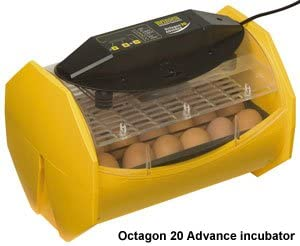 LITTLE GIANT CIRCULATED AIR INCUBATOR w//DIGITAL DISPLAY Self Regulating 41 Eggs