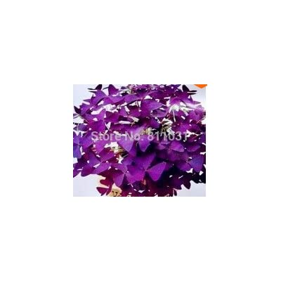 100 pcs/Bag, Purple Clover, Purple Butterfly, Clover, Purple Leaf Shamrock Seeds, Office Desktop Indoor, : Garden & Outdoor