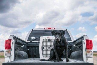 Ruff Tough Single Door Dog Kennel (Intermediate)