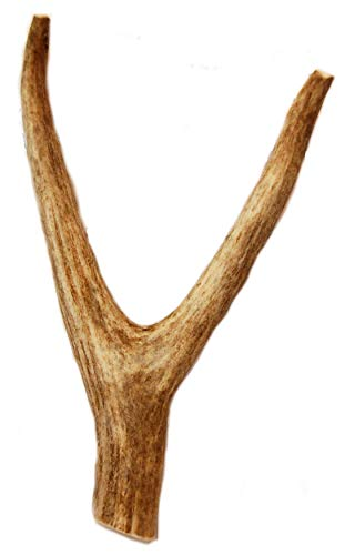 Deer Antler Fork Dog Chew - Large - 8 Inches to 10 Inches - For Medium to Large Size Dogs - Big Dog Antler Chews Brand