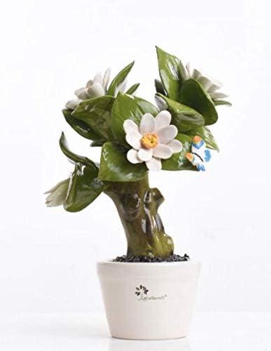 Gli Alberelli Pianta Magnolia: Amazon.it: Casa e cucina
