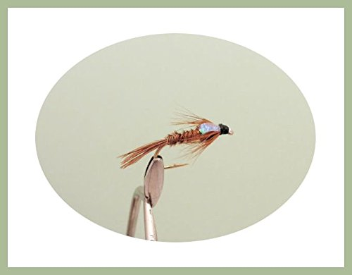 Goldhead Pheasant tail Nymph Choice of Sizes Available 6 Pack Trout Fishing Fly Flash Head