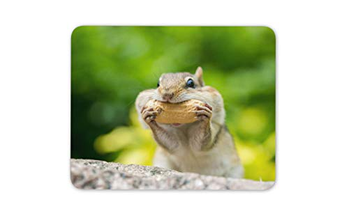 Cheeky Chipmunk Mouse Mat Pad - Rodent America Animal Fun Computer Gift #16528