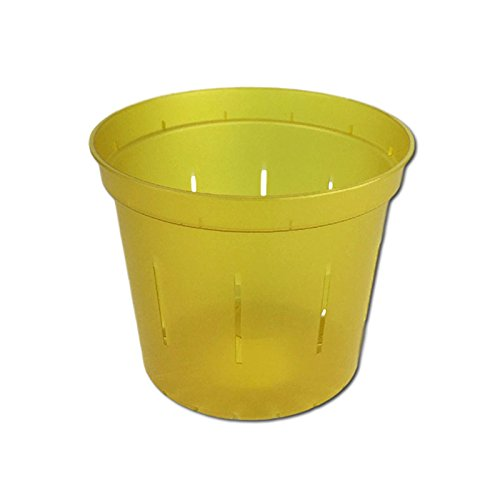 "4"" Slotted Clear Orchid Pots - 6 Pack (Yellow Topaz)"