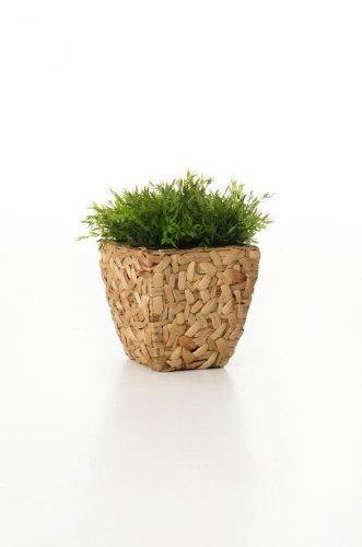 VIVANNO Einzel Pflanzgefäß Wasserhyazinthe
