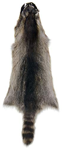 AuSable Fur Tanned Silver Satin Raccoon Fur Pelt with for sale  Delivered anywhere in USA