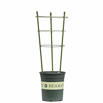ADSRO Plant Support Ring 3 Ring 600mm Garden Plants Flower Basket Plant Fixed Climbing Gardening Plant Cage Potted Solid Vine Vines : Garden & Outdoor