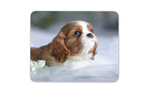 Cavalier King Charles Spaniel Mouse Mat Pad - Puppy Dog Fun Computer Gift #12505