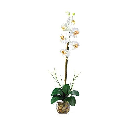 Nearly Natural Single Phalaenopsis Liquid Illusion Silk Flower Arrangement Cream