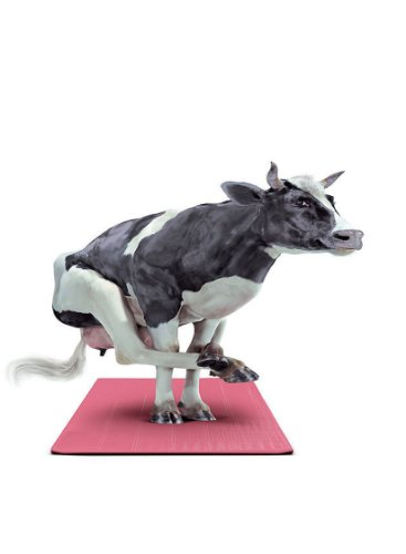 (Rectangle Refrigerator Magnet - Squatting Cow on a Yoga Mat)