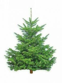 Weihnachtsbaum echt klein