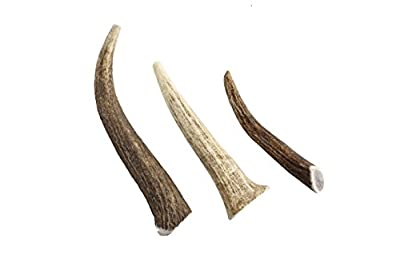 Gnawtlers - Premium Elk Antlers For Dogs, Naturally Shed Elk Antlers, All Natural Elk Antler Chews, Specially Selected From The Rocky Mountain & Heartland Regions - Elk Antlers For Dogs
