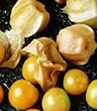 200 GROUND CHERRY Physalis Pubescens (Golden Strawberry / Chinese Lantern) Vegetable Seeds *Comb S/H