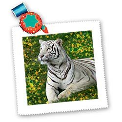 3dRose LLC qs_4830_1 White Tiger 10 by 10-Inch Quilt, Square