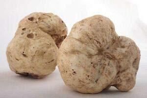 (Oregon White Truffle (Tuber oregonense) Oregon White Truffle Mycelium Dried Seeds Spawn Oregon Truffle Spores (0.5 oz / 14 g) by Don Porcini)
