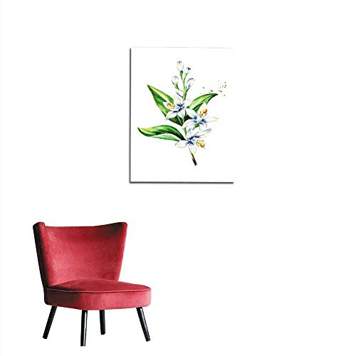 longbuyer Wall Sticker Decals Neroli Branch with Flowers and Leaves Watercolor Hand Drawn Illustration Isolated on White Background Mural 20