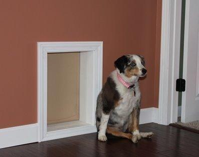 Large Wall Mounted Dog Door