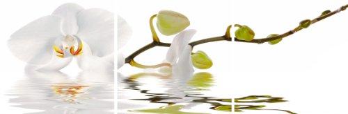 Цвет: орхидея отражение