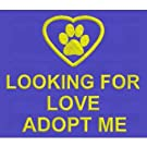Therapy Dog Vest, Service Dog Vest & Adopt Me Vest Looking for love adopt me vest - Adopt Me Vests Therapy Dog Vest, Service Dog Vest & Adopt Me Vest