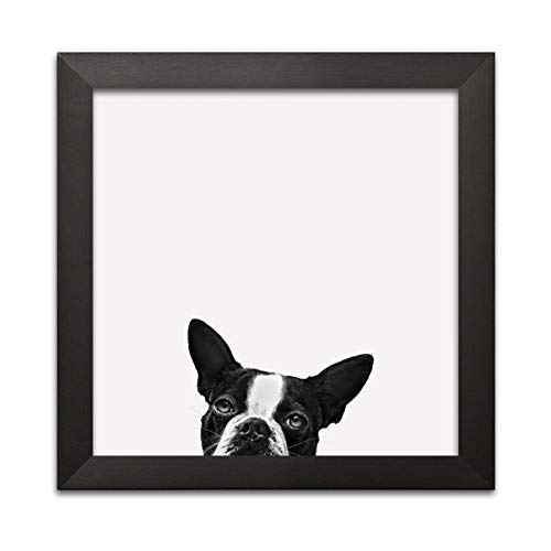 Gango Home Décor Loyalty | Adorable Black and White Boston Terrier; One 12x12 Black Framed ()