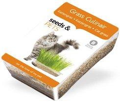 Kit de Cultivo hierbas para Gatos VITAL