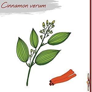 Organic Ceylon Cinnamon by Eternal Zen Pure and Premium USDA Grade Tablet from Sri Lanka Help Lower Blood Sugar Naturally