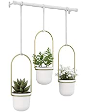 Umbra Hanging Planter, for Succulents, Herbs and Other Small Plants