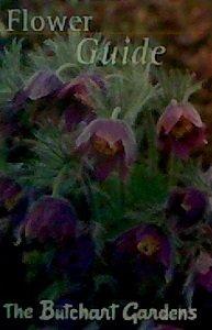 (Flower Guide: The Butchart Gardens)