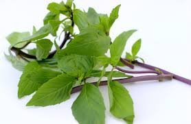 The Dirty Gardener Thai Basil Herb - 500 Seeds
