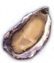 Charleston Seafood Oysters, 50 count box