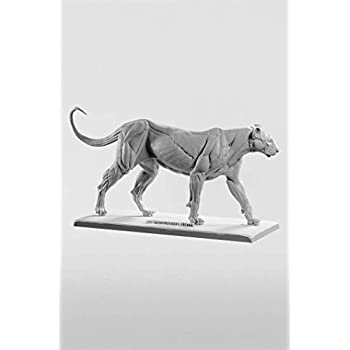 Image of Artists' Manikins 3dtotal Anatomy: Feline Figure