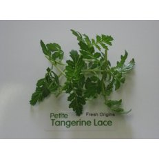 Petite Greens - Tangerine Lace - 4 x 8 oz