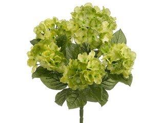 175-Garden-Hydrangea-Bush-x5-Two-Tone-Green-Pack-of-12