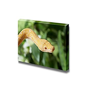 Canvas Prints Wall Art - Lavender Tiger Albino Python Snake Closeup | Modern Wall Decor/Home Art Stretched Gallery Canvas Wrap Giclee Print & Ready to Hang - 12