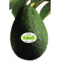 Calavo California Supreme Avocado, 3 Pound -- 4 per case.
