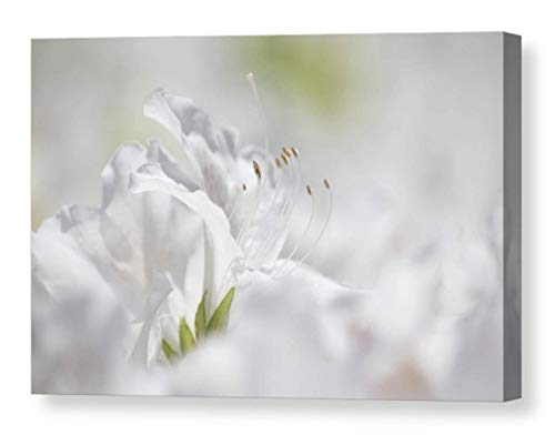 Dreamy Floral Wall Art on CANVAS White Azalea Photo Ethereal Flower Print Delicate Garden Home Decor Grey Rhododendron Picture Ready to Hang 8x10 8x12 11x14 12x18 16x20 16x24 20x30 ()
