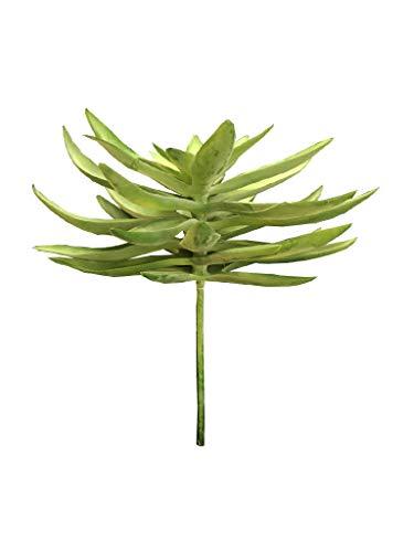 Suculenta 1 Ramo Sarquis Samara Verde