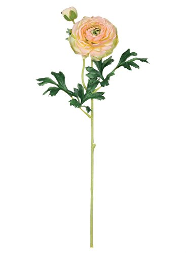 Sullivans Ranunculus Stem B07DPN6226