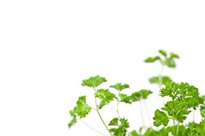Chervil Curled - Herb Seeds