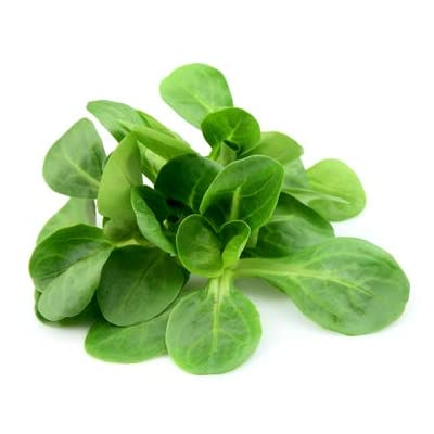 Mache Lettuce - Delicious Verte de Cambrai - 3000 Seeds of Small Leaf Variety and Best for Overwintering in The Cold Northeast. Corn Salad. : Garden & Outdoor