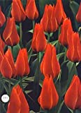 img - for Bulbs -The Time-Life Encyclopaedia of Gardening book / textbook / text book