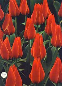 Bulbs -The Time-Life Encyclopaedia of Gardening