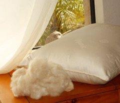 2 Kapok Organic Cotton Pillows Standard