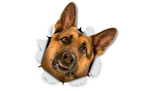 Sticker Shepherd Dog (Winston & Bear 3D Dog Stickers - 2 Pack - Curious German Shepherd for Wall, Fridge, Toilet and More - Retail Packaged German Shepherd Dog Stickers)