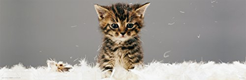 Kitty Kitten Cat In Feathers Cute Animal Photography Decorative Art Print  Unframed 12X36 Poster